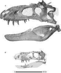 Scientists Discover New Species of Tyrannosaur