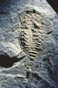 Ancient Wind held Secret of Life and Death