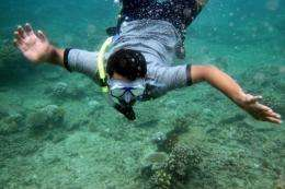 An environmental activist examines coral damaged by bleaching in the area of Ujong Pancu, Aceh Besar