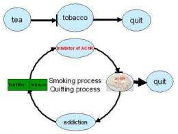 A new effective strategy for treating tobacco addiction was developed by researchers from the CAS