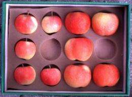 Apples grow larger when cells don't divide, study shows