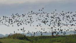 A precious swamp, habitat to many wild birds, has shrunk to less than one percent of its original size
