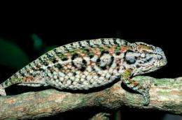 As global temperatures rise, the world's lizards are disappearing