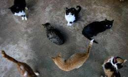 Australian scientists plan to use curiosity to kill some of the country's millions of wild cats