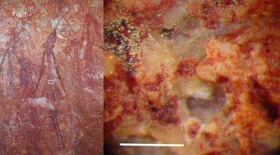 Bacteria and fungi keep some ancient Australian rock art colors vivid