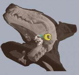 Bat researchers no longer flying blind on echolocation