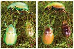 Beetles stand out using Avatar tech