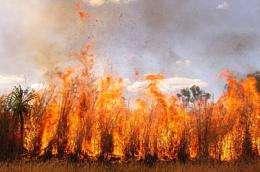 Biofuel crops push ignoring biosecurity impacts