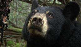 Black bear about to bear cubs live on Internet (AP)