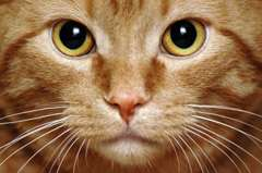 Cat brain: A step toward the electronic equivalent