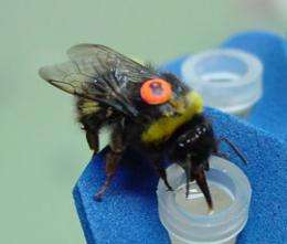 Complex mathematical problem solved by bees