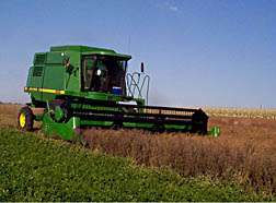 Cuphea Does Wonders for Wheat and Corn in Rotations