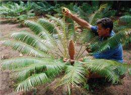 Cycad plant depends on insect for multiple services