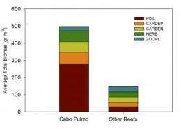 Damage to threatened Gulf of California habitats can be reversed
