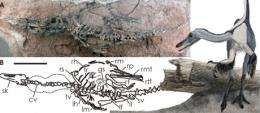 Dinosaur discovery helps solve piece of evolutionary puzzle