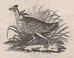 Discovered: Audubon's first engraving of a bird