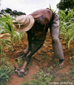 Discovery offers hope of saving sub-Saharan crops from devastating parasites