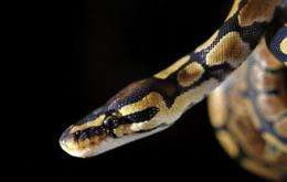 Distinct populations of snake species on three continents have crashed over the last decade