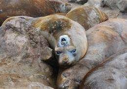 Elephant seals improve maps of Antarctic seafloor