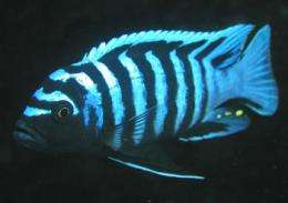 Fish study turns colour vision theory inside out