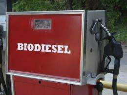 Fungus among us could become non-food source for biodiesel production