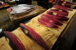 Global fears over tuna stocks emerged in 2007 when France declared it had caught nearly 10,000 tons, double its quota