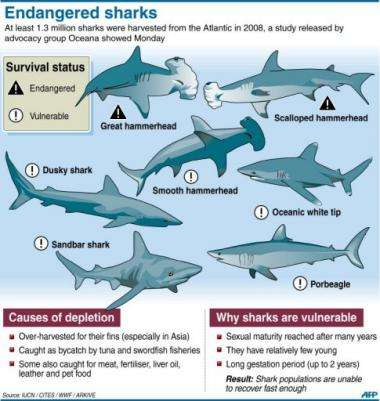 Graphic on endangered shark species