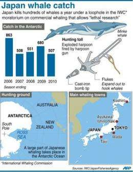 Graphic on Japan's whale catch