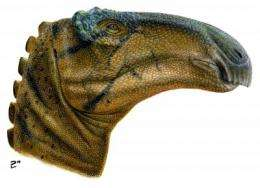 'Grinding mouth, wrinkle eye': Penn graduate student describes new species of plant-eating dinosaur