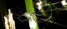 GW Researchers Uncover Identity Of Spider Discovered By Darwin More Than A Century Ago