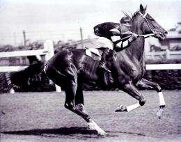 Hair analysis proves it: Legendary racehorse Phar Lap died of arsenic poisoning in 1932