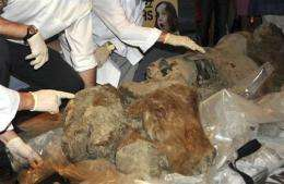 Ice Age baby mammoth on display at French museum (AP)