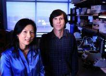 Identification of glaucoma gene brightens view for future therapies