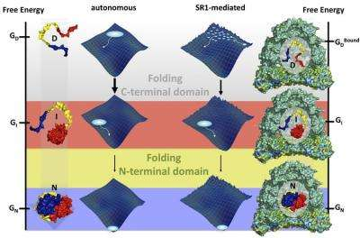 Physicists help biologists to understand protein folding
