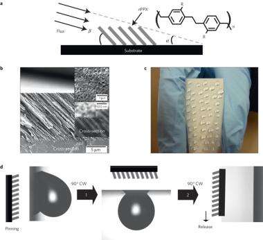 Scientists imitate nature to engineer nanofilms