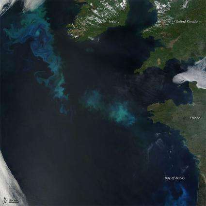 Image: Phytoplankton Bloom in the North Atlantic