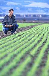 In Organic Cover Crops, More Seeds Means Fewer Weeds