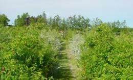 Integrated, organic production systems evaluated for 'liberty' apple