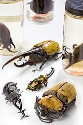 Invertebrate Collections Help Solve Agricultural Problems