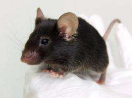 JAPAN-SCIENCE-BIOTECH-MOUSE-LANGUAGE-OFFBEAT