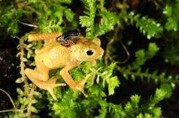 Kihansi spray toads make historic return to Tanzania