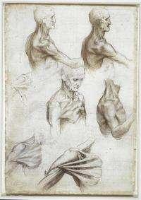 Leonardo's anatomical sketches fascinate modern-day anatomist