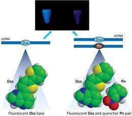 Light games with DNA