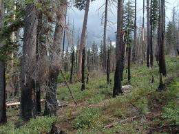 More frequent fires could aid ecosystems