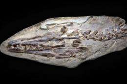 Mosasaur fossil at Natural History Museum of L.A. County re-explores 85-million-year-old sea monster