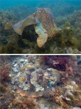 Nano squid skin: DOD awards $6M for metamaterials research