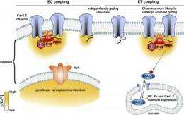 New perspectives on local calcium signaling