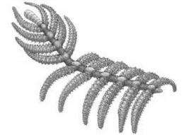 'Walking cactus' rewrites arthropod odyssey