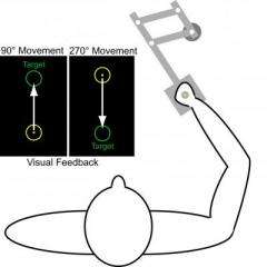 Observation about how nervous system learns and encodes motion could improve stroke recovery