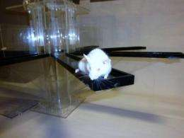 Of mice and memory: 'Working memory' of mice can be improved